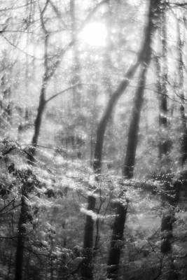 Photograph - The Magic Forest  by Alex Potemkin