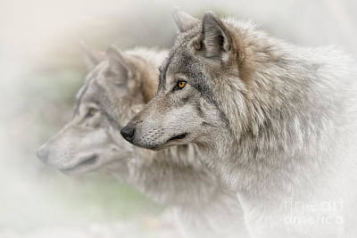 Photograph - Timber Wolves by Michael Cummings