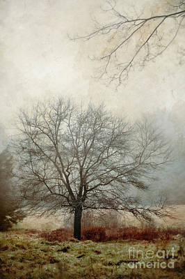 Massachusetts Photograph - Tree by HD Connelly