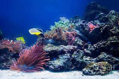 Climate Photograph - Underwater Life by Michal Bednarek