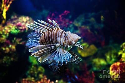 Aquarium Photograph - Underwater View by Michal Bednarek