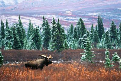 Alaska Photograph - Usa, Alaska, Denali National Park by Hugh Rose