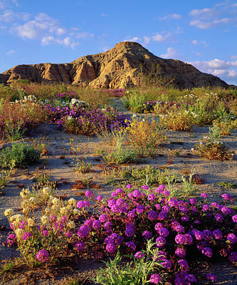Usa, California, Anza-borrego Desert Art Print by Jaynes Gallery