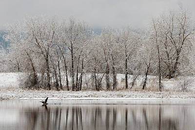 Canadian Geese Photograph - Usa, Colorado, Boulder by Jaynes Gallery