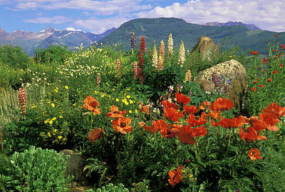 Flower Gardens Photograph - Usa, Colorado, Crested Butte by Jaynes Gallery