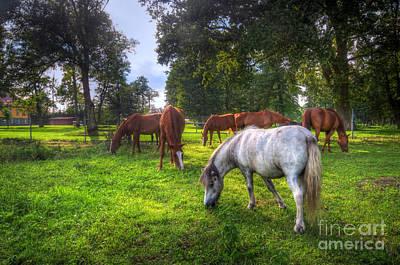 Seasons Photograph - Wild Horses On The Field by Michal Bednarek