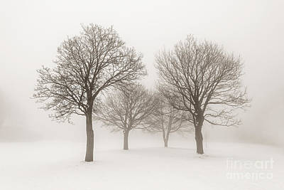 Photograph - Winter Trees In Fog by Elena Elisseeva