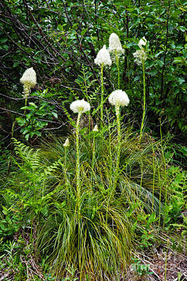 Photograph - 714a Beargrass by NightVisions