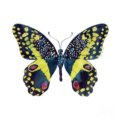 On-white Painting - 73 Citrus Butterfly by Amy Kirkpatrick