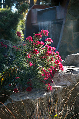 Photograph - 733p Red Aster by NightVisions
