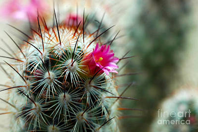 Photograph - 734a Tubular Cactus Flower by NightVisions