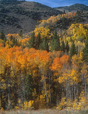 Photograph - 742900067 Fall Color Lundy Canyon Eastern Sierras California by Dave Welling