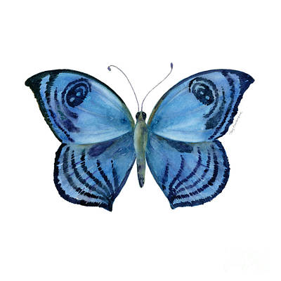 Recently Sold - Animals Royalty-Free and Rights-Managed Images - 75 Capanea Butterfly by Amy Kirkpatrick