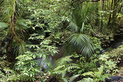 Spring Scenery Photograph - Jungle by Les Cunliffe
