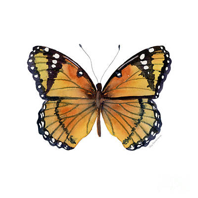 On-white Painting - 76 Viceroy Butterfly by Amy Kirkpatrick