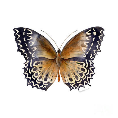 Black Background Painting - 77 Cethosia Butterfly by Amy Kirkpatrick