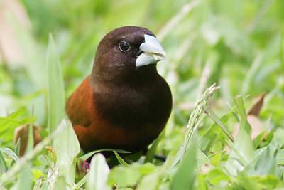 Mannikins Photograph - Birds Of The World by Hal Beral - Vwpics