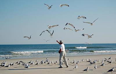 Photograph - 79 Seagulls by Linda Brown