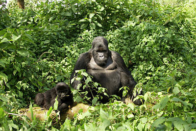 Mcdonalds Photograph - Africa, Rwanda, Volcanoes National by Joe and Mary Ann Mcdonald