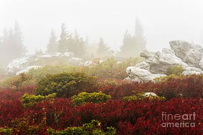 Autumn Fog Bear Rocks Art Print