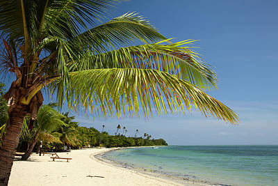 Beach And Palm Trees, Plantation Island Art Print by David Wall