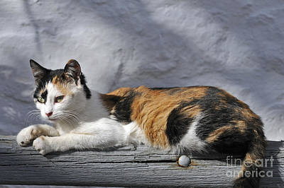 Bench Photograph - Cat In Hydra Island by George Atsametakis
