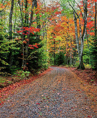 Dirt Road Passing Through A Forest Art Print
