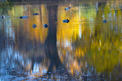 Photograph - 8 Ducks On Pond by Deprise Brescia