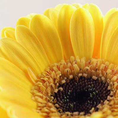 Leinwand Photograph - Flower  by Falko Follert