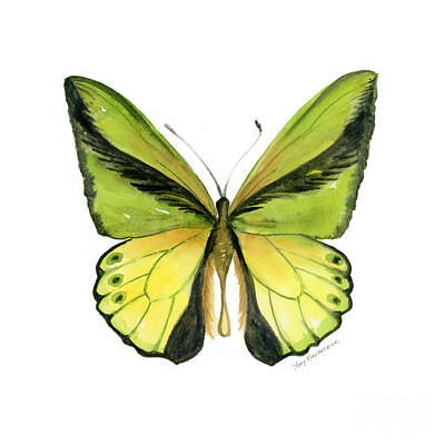 Animals Paintings - 8 Goliath Birdwing Butterfly by Amy Kirkpatrick