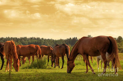 Pony Photograph - Horses On The Field by Michal Bednarek