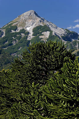 Green Chile Photograph - Huerquehue National Park, Chile by Scott T. Smith