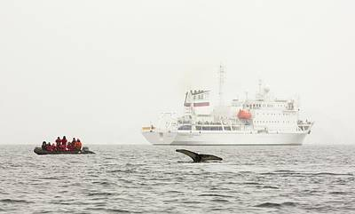Warming Filter Photograph - Humpback Whales Feeding On Krill by Ashley Cooper