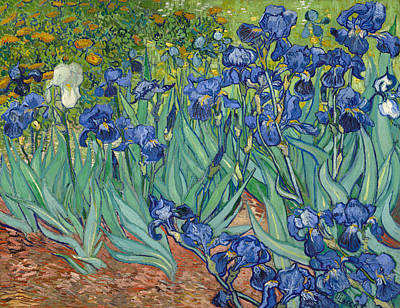 Netherlands Painting - Irises by Vincent van Gogh