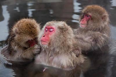 Japanese Macaque (macaca Fuscata Art Print by Peter Adams