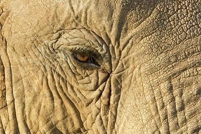 Kenya, Samburu National Reserve Art Print