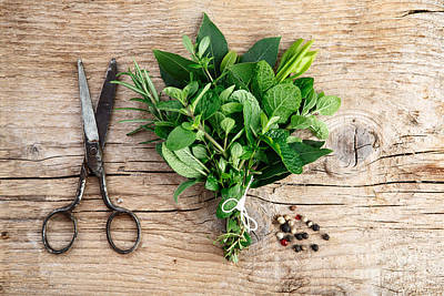 Royalty-Free and Rights-Managed Images - Kitchen Herbs by Nailia Schwarz