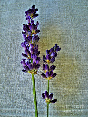 Photograph - Lavender On Linen by Nina Ficur Feenan