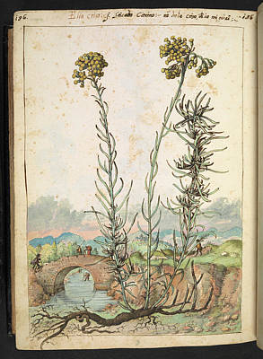 Botanist Photograph - Medicinal Plant by British Library
