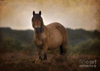 New Forest Pony Art Print by Angel Ciesniarska