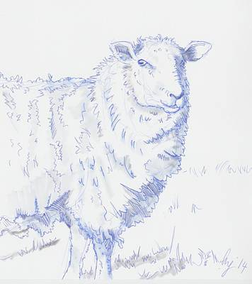 Sheep Drawing - Sheep by Mike Jory