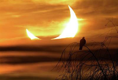 Solar Eclipse Photograph - Solar Eclipse by Detlev Van Ravenswaay