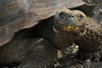 Galapagos Photograph - South America, Ecuador, Galapagos by Jaynes Gallery