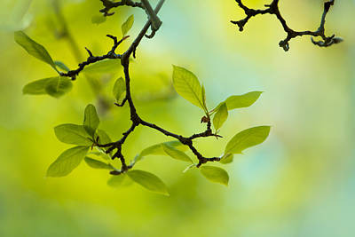 Branches Photograph - Spring Green by Nailia Schwarz