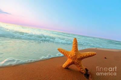 Starfish Photograph - Starfish by Michal Bednarek