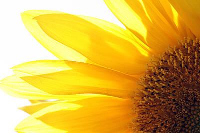 Sunflower  Art Print by Cindi Ressler