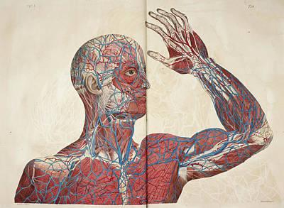 The Circulatory System Art Print