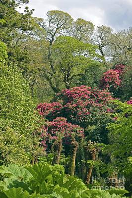 Heligan Photograph - The Lost Gardens Of Heligan, Uk by Dr. Keith Wheeler