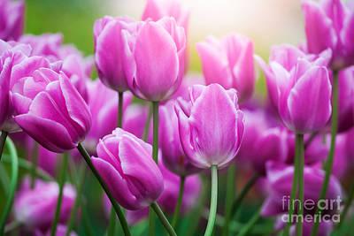Photograph - Tulips by Katka Pruskova