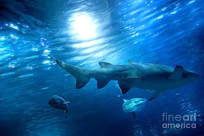 Aquatic Photograph - Underwater View by Michal Bednarek